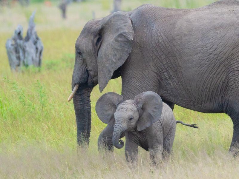 emerald safari dazzle africa february 2021